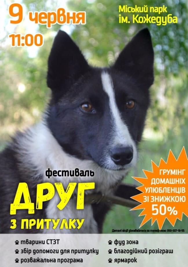 dog-friend