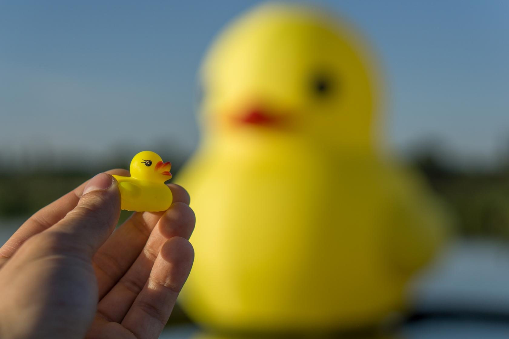 cxid-rock-duck-02