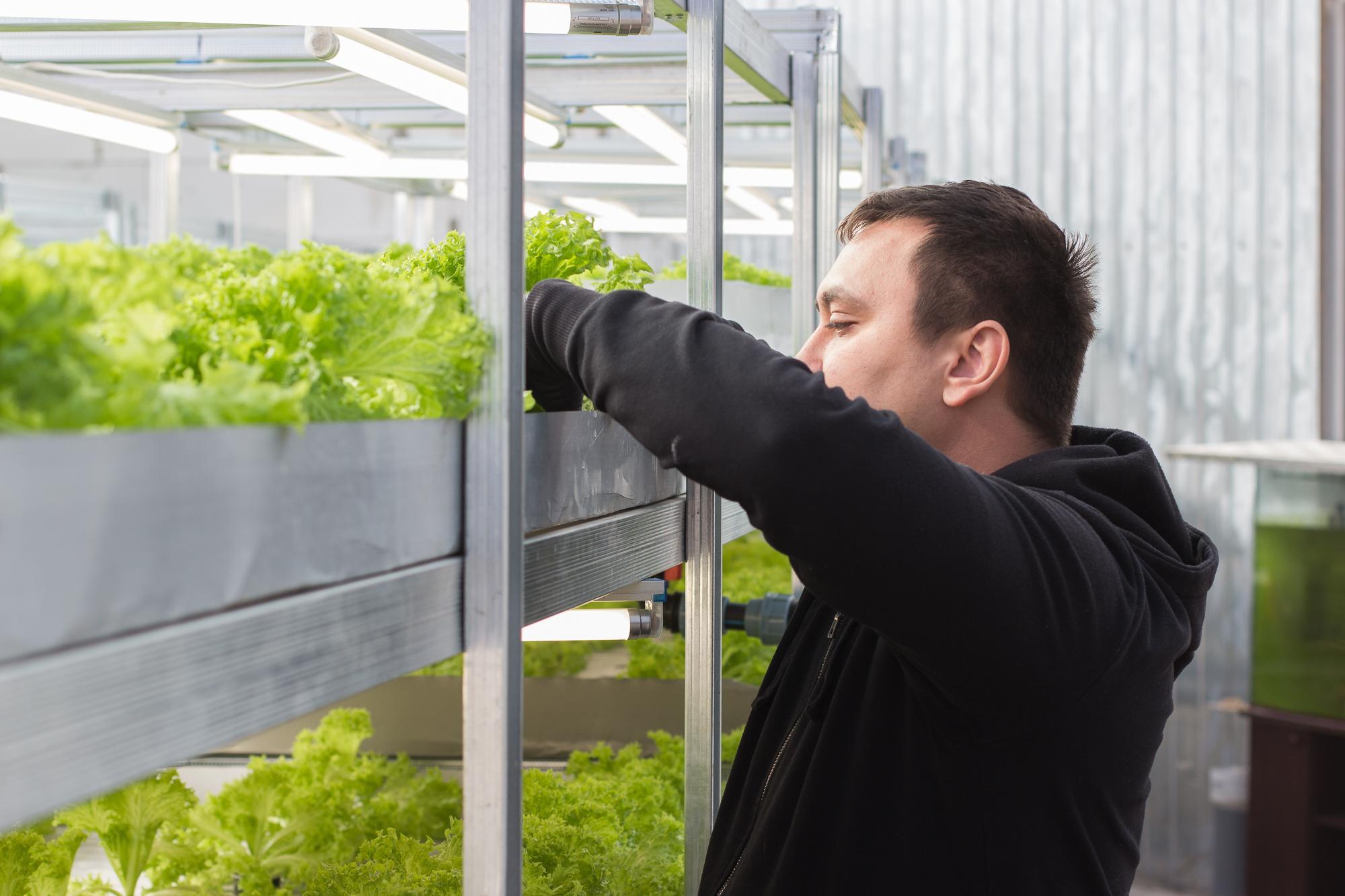 Листя салату виростити