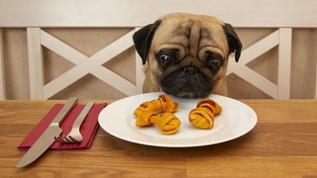 Собака їсть