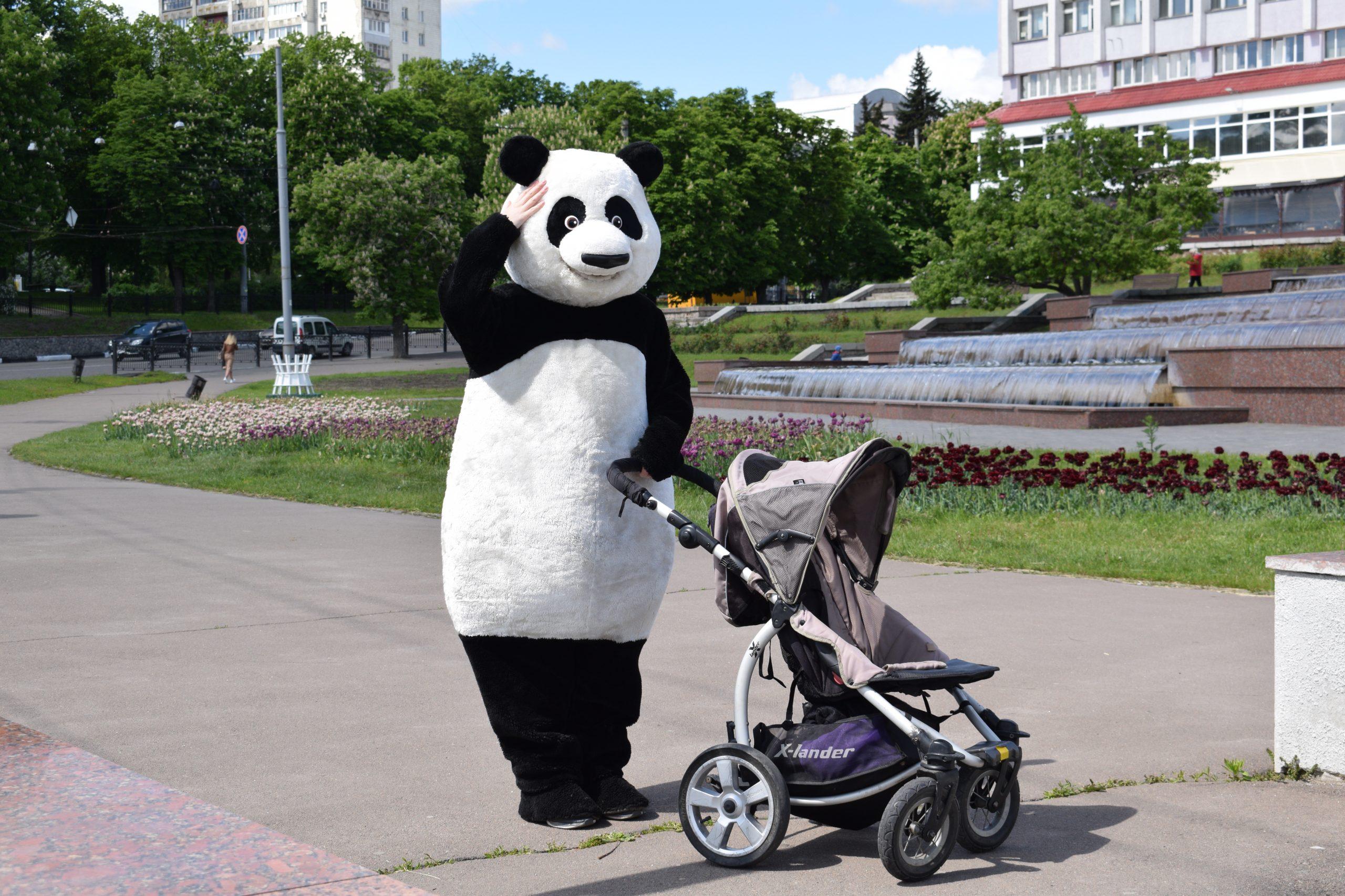 Панда сумська