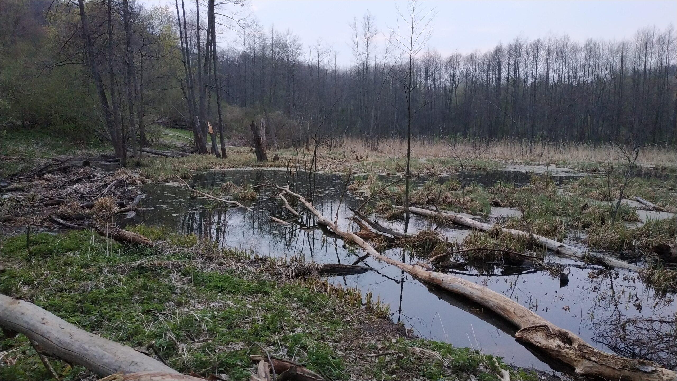 Невелика дамба та джерела, які живлять озеро. Фото: Цукр